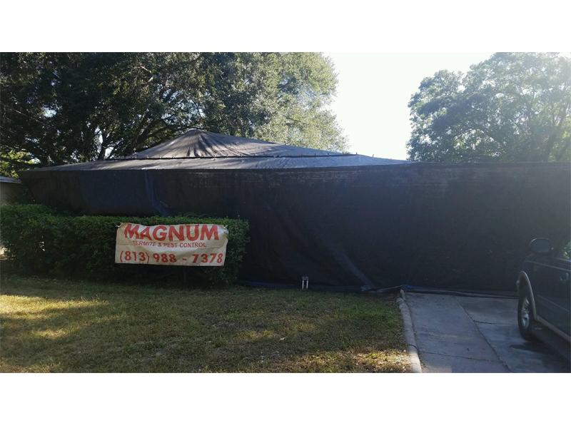 Magnum Tent Fumigation-1 Magnum Tent Fumigation-2 ...  sc 1 st  Magnum Termite and Pest Control & Magnum Termite and Pest Control - Removing Rodents